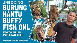 UNBOXING BURUNG HANTU LIMBAD (Buffy Fish Owl)