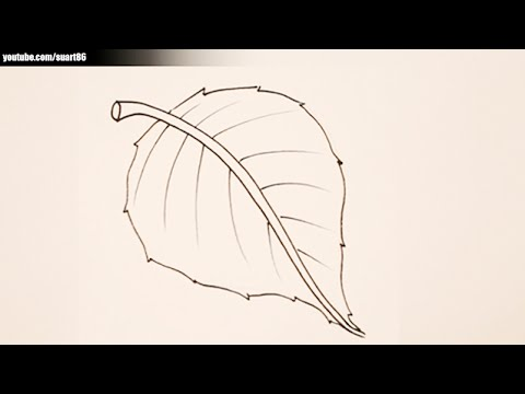 Leaf drawing for kids