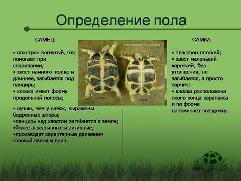 Как определить - жива черепаха, в спячке или умерла