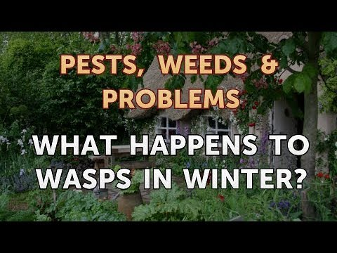 What Happens to Wasps in Winter?
