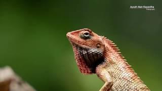 Lizard- Beautiful Bokeh, The Theme For Nepal Photo Gallery.