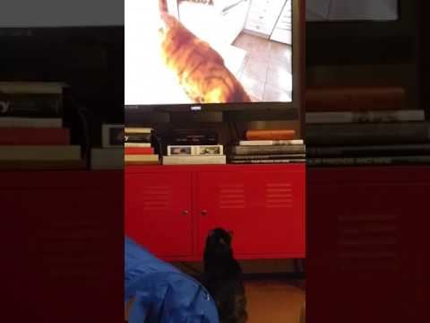 Cats watching documentary on cats