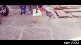 Fardeen Qureshi fanny video