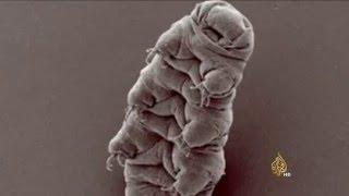 عودة كائنات دقيقة للحياة بعد تجميدها