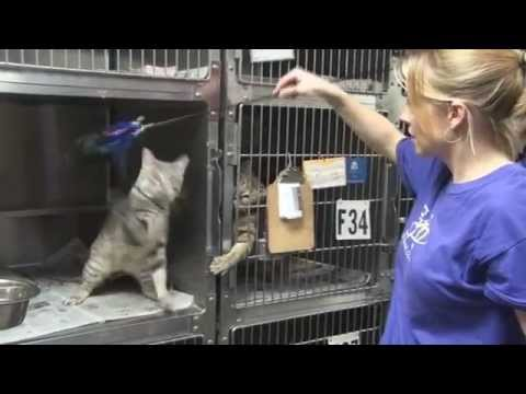 """The SPCA of Wake County says """"Thank You"""""""
