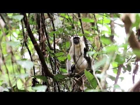Pemba Island - Manta Resort - Matoke Tours