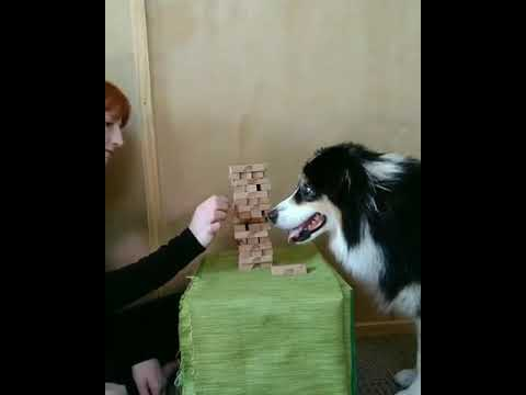 Must See Popular Videos | Plugged In - Dog playing Jenga