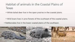 Coastal Plains by Tyler and Leonardo