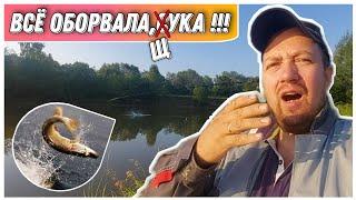 ВЛОГ Как так то опять не повезло Рыбалка на щуку в АВГУСТЕ Приманки на щуку Ловля на джиг с берега
