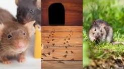 Pest Control Haltom City TX 76117 Rodent Control