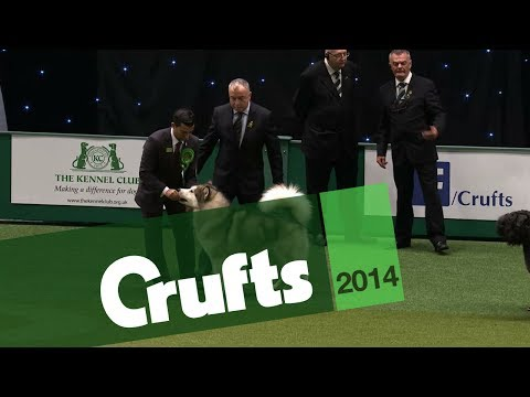 Group Judging | Working Group | Crufts 2014