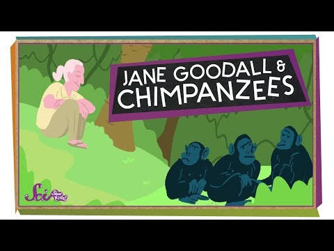 Into the Forest with Jane Goodall!