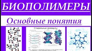 Биохимия. Биополимеры: белки, нуклеиновые кислоты, полисахариды. Основные понятия.