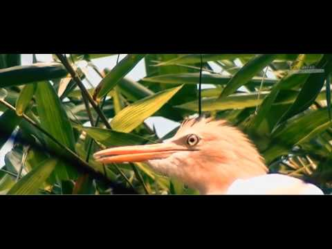 Baras Bird Sanctuary documentary film