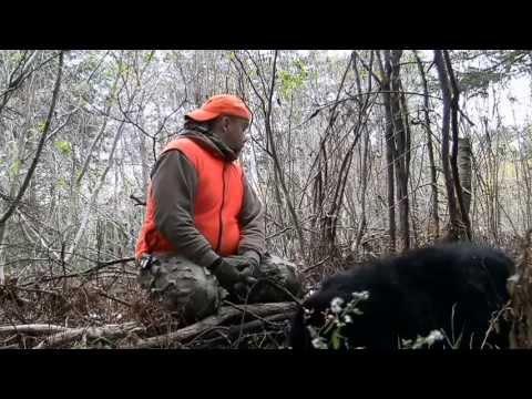 New Brunswick Black Bear Hunt 2013