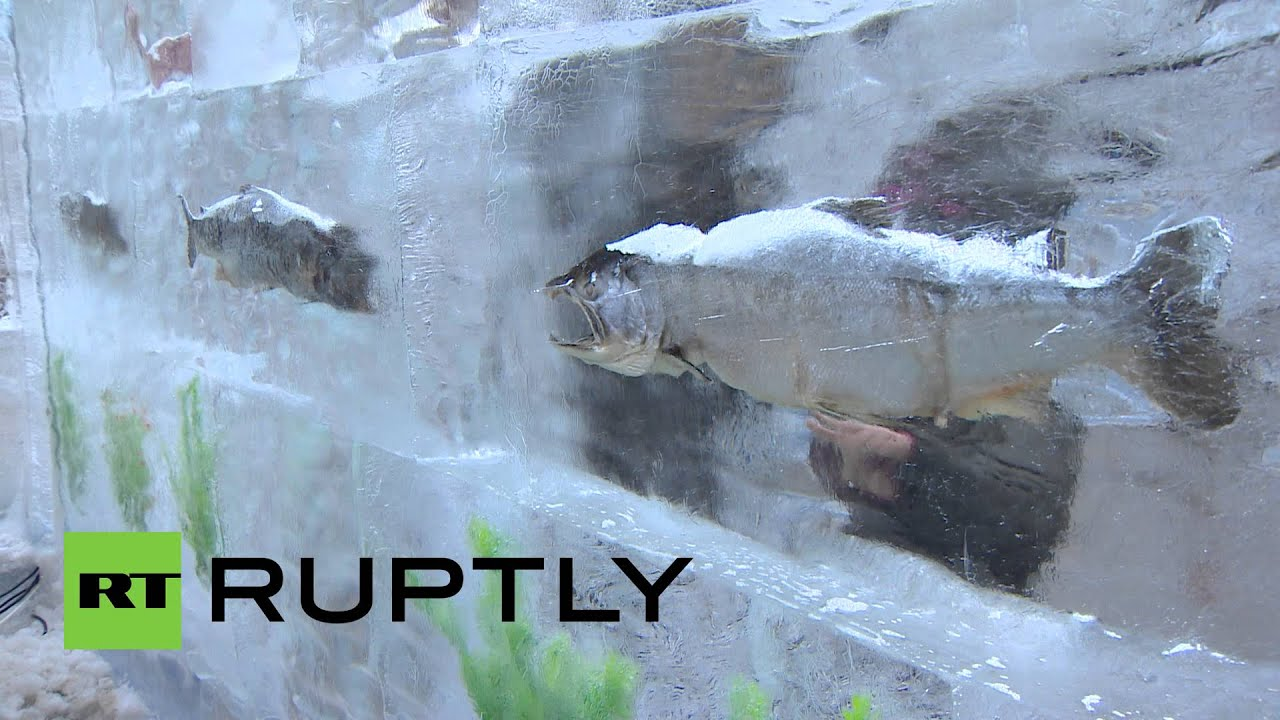 Продажа замороженной рыбы. Широкий ассортимент, контроль качества и круглосуточная доставка в москве и области. +7 (495). Кета (2) ледяная (1).