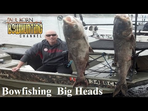Bowfishing for Big Head Carp on Missouri River bow fishing how we bow fish rough fish