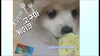 강아지 케이크 만들기 / 고구마케이크 / 초간단!