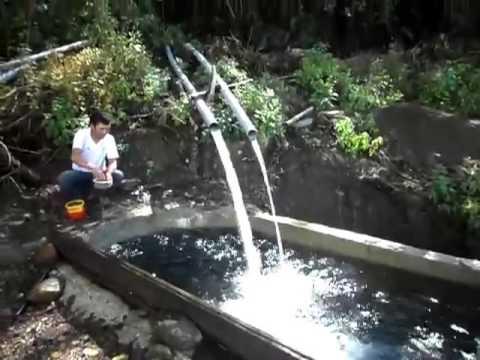 Pisigranja en Miraflores - Tulpo
