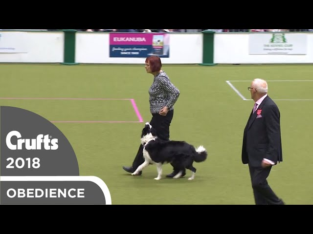 Obedience - Bitch Championship - Part 17 | Crufts 2018