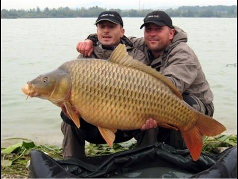 Мощнейшая приманка для рыбы Fish Hungry Фиш Хангри