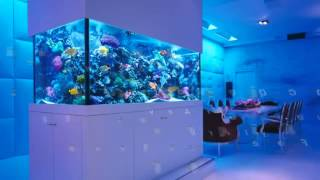 aquarium maintenance for the holidays