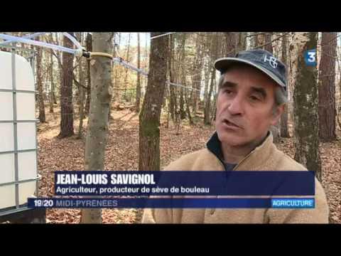 Reportage FRANCE 3 seve de bouleau bio Ariège Pyrénées 2017