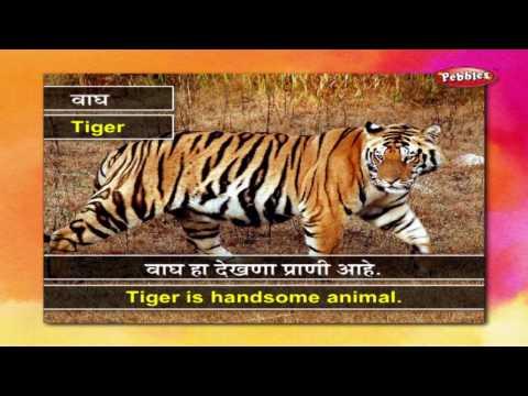 Learn Marathi Through English : Animals, Birds, Flowers, Fruits, Vegetables, Food