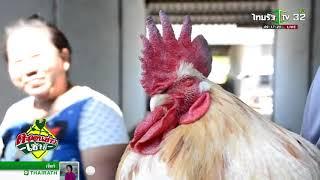 จันทบุรี ไก่อู้เพศผู้ออกไข่เหมือนตัวเมีย  | 19-12-60 | ตะลอนข่าวเช้านี้