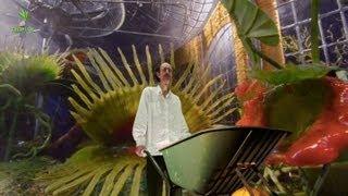 Feeding the Giant Carnivorous Burping Pitcher Plants (English subtitles)