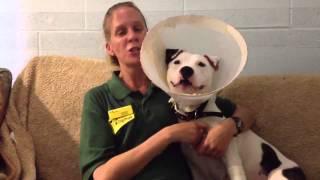Dogs Trust Leeds: Jasmine