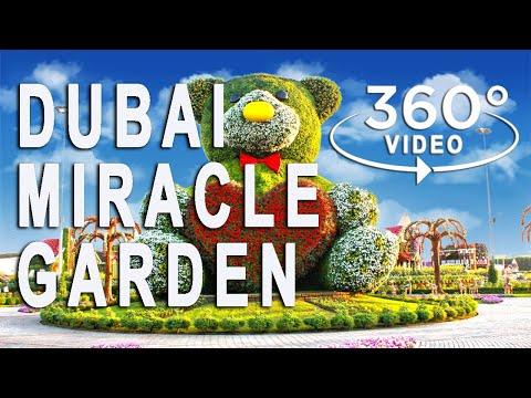 360° Video | Dubai Miracle Garden | UAE