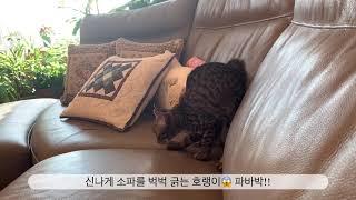 고양이 키우는 집 소파 스크래치 방지법 (웃김 주의)