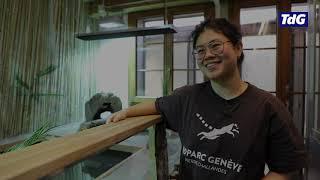 Crocodiles sacrés, les nouveaux résidents du Bioparc Genève