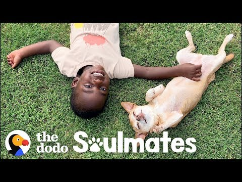 Little Boy Terrified Of Dogs Til He Meets This Senior Pup | The Dodo Soulmates