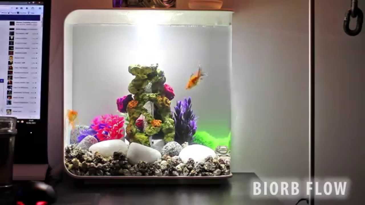 Biorb Flow 30l Fish Tank With 2 Happy Fish Youtube