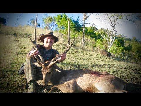 Hunting Rusa deer in New Caledonia part 20