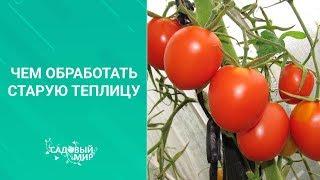 Чем обработать старую теплицу перед посадкой томатов, перцев и баклажан