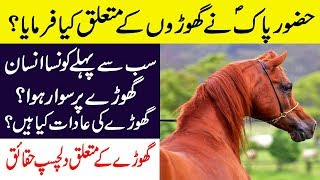 Aap S.a.w Ne Farmaya    Hidden Facts About Horses In Hindi/urdu    Facts About Horses!