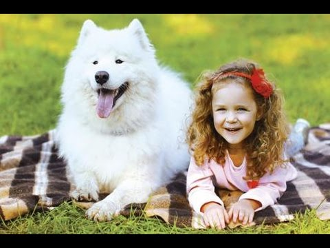 Samoyed and Little girl Playtime # samoyed Dog showing love to Baby | Dog loves Baby Compilation #5