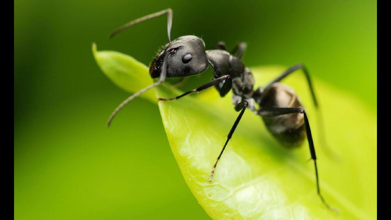 Cómo Se Realiza El Proceso Alimenticio De Las Hormigas Tvagro Por Juan Gonzalo Angel