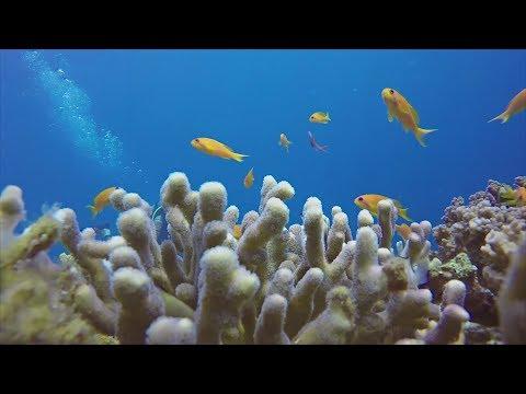 Почему кораллы в Красном море не теряют цвет?