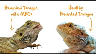 What to do if your bearded dragon gets sick