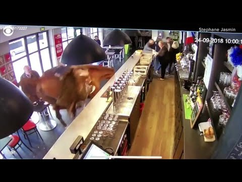 Paul - Horse In Bar Sends Patrons Running