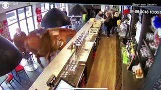 Horse runs into French sports bar, sends patrons running