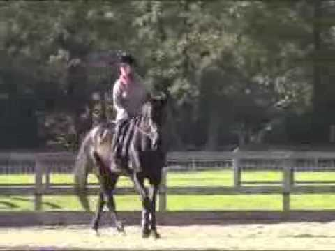 Bella riding Rudy - Dressage to Music Lesson with Amanda Birch 10 Nov 2013