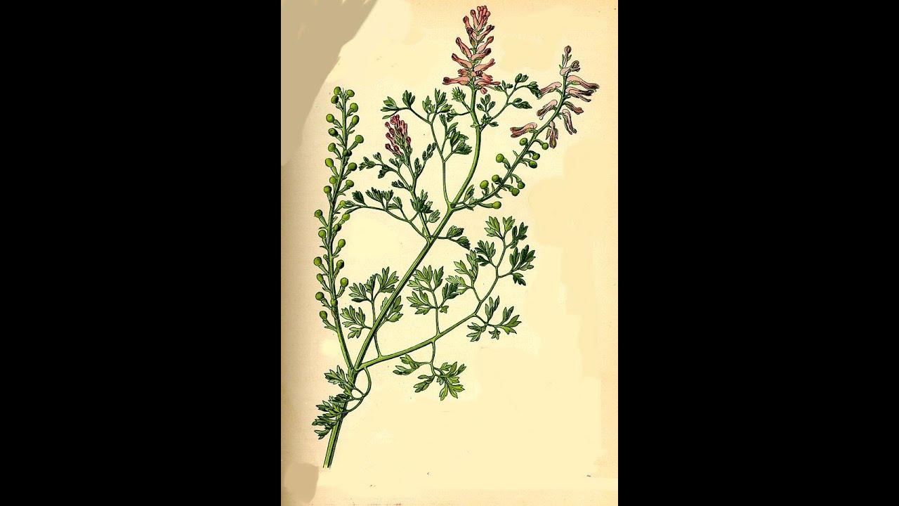 plantas medicinales para adelgazar la sangre