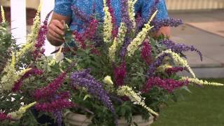 Cottage Farms 3-pc. Flutterby Multi-Color 3-in-1 Butterfly Bush with Jane Treacy