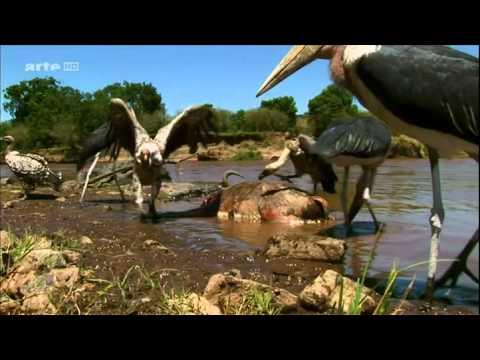 Sur Les Ailes Des Oiseaux E02 L'Afrique