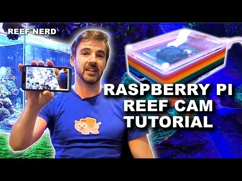 Tutorial - Raspberry Pi Based Reef Cam - UV4l And WebRTC